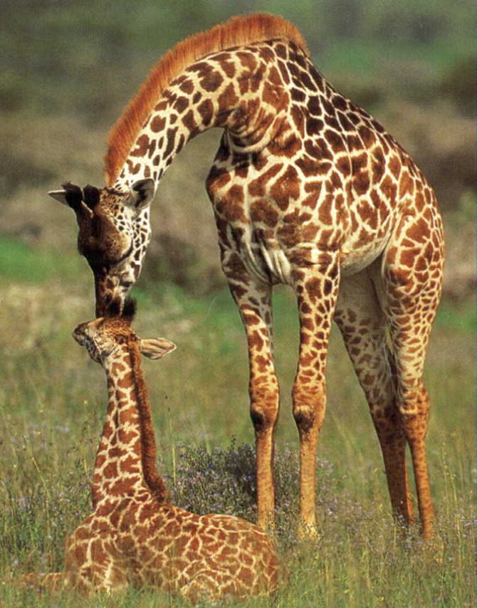 babygiraffeandmom