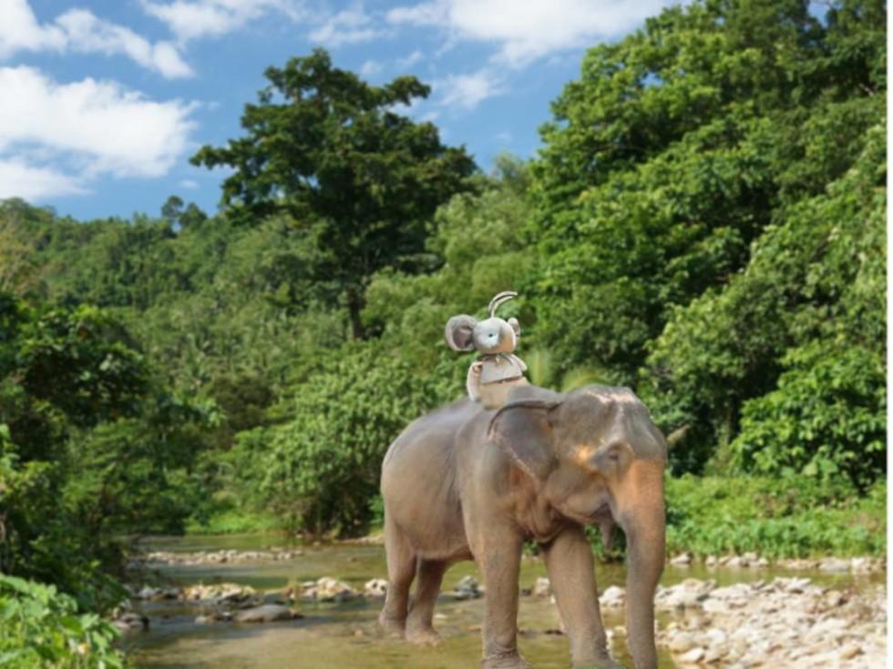 elefante_india_MGZOOM