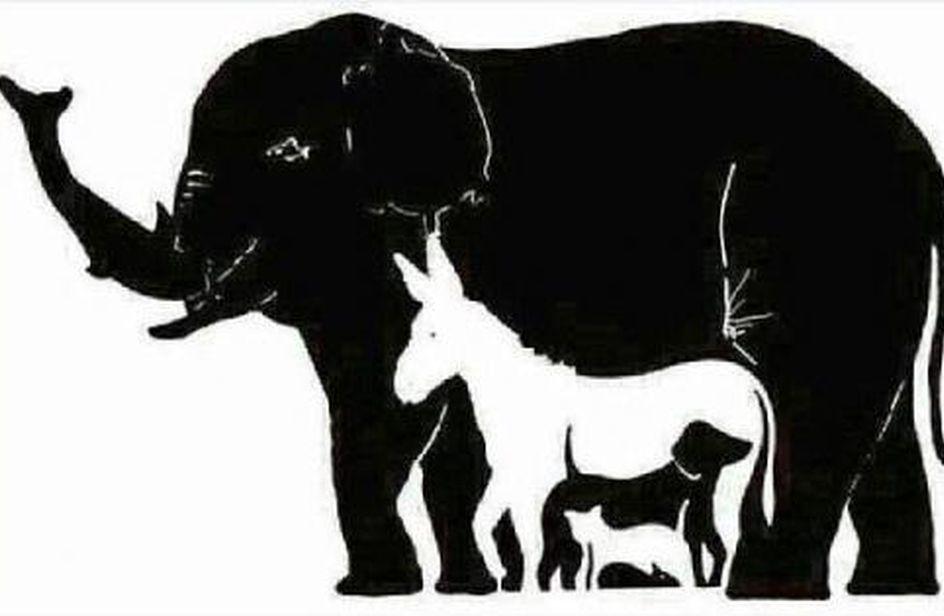 quanti_animali-1-1